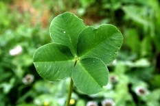 4-leaf clover good luck