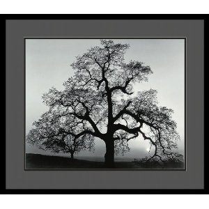 Ansel Adams oak tree print